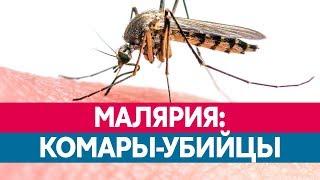 ЧЕМ ОПАСНА МАЛЯРИЯ? Какие комары ее разносят и каковы ее последствия?