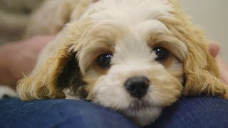 Youtube thumbnail for Jenny-May visits VetCare