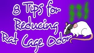 8 Tips for Reducing Rat Cage Odor