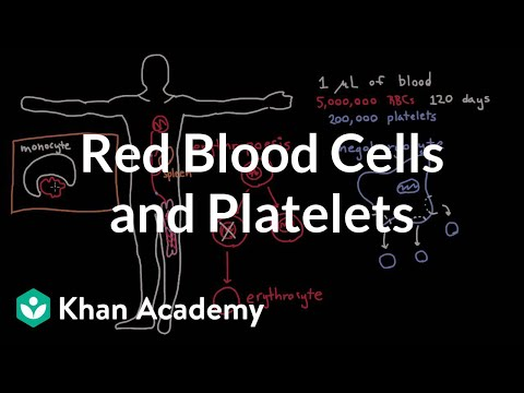 Life and times of RBCs and platelets (video) | Khan Academy