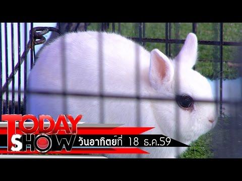 TODAY SHOW 18 ธ.ค. 59 (2/3) แปลก เฮ ซ่าส์ กระต่าย