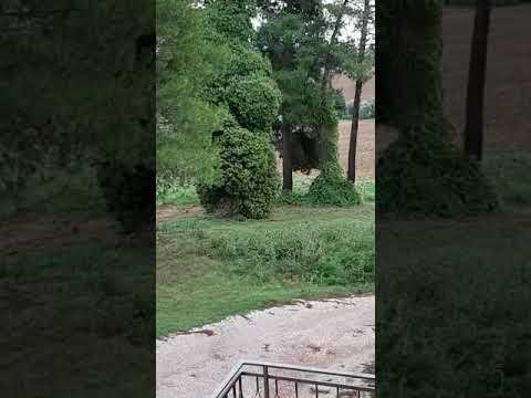 Perugia, il cacciatore è vicino casa: videodenuncia
