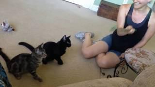 Смешное видео про котов спорим ты засмеешься #1