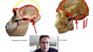 Skullcast: Comparison Of Hominin Skulls