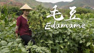Two new ways of cooking edamame: Edamame & Pumpkin Stew and Edamame Salad.