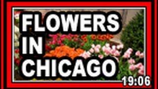 Flowers In Chicago - Wisconsin Garden Video Blog 568