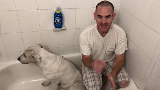 Amazing way to bathe your dog well, get rid of fleas!  Canine cleaning made EZ
