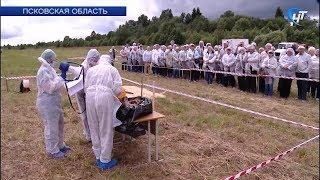 Новгородские ветеринары приняли участие в учениях по профилактике африканской чумы свиней