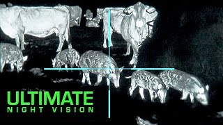 Gambar cover The Clearest Thermal Hunt Footage Ever   25 Hogs and 10 Coyotes Down