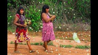 Xingu, histórias dos produtos da floresta | Frutas