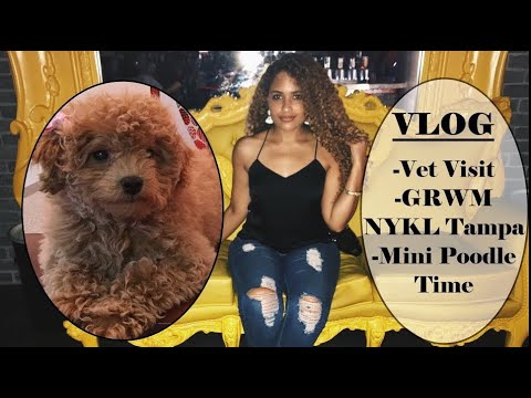 Vet Vist, Mini Poodle Life & GRWM Happy Hour at NYKL Tampa