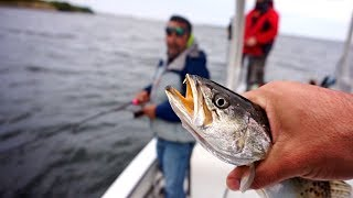 VentureTube: Florida Inshore FISHING with Live Shrimp and GULP!!