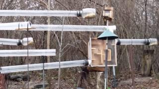 Squirrel Tube Maze