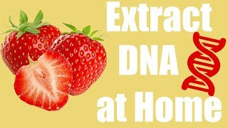 Extract DNA from a Strawberry at Home - Cool Science Experiment