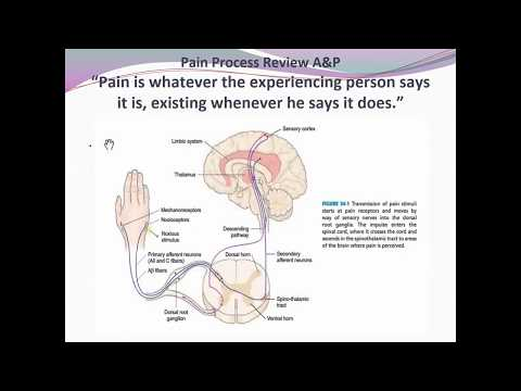 Fundamentals Pain Management Unit 10 F18