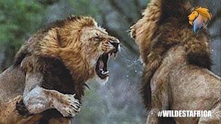 Epic Wild Animal Battles Compilation | Wildest Africa – Epic Wildlife Videos