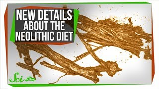 The Neolithic Diet: New Details About What