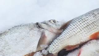 Рыбалка на истринском водохранилище зимой
