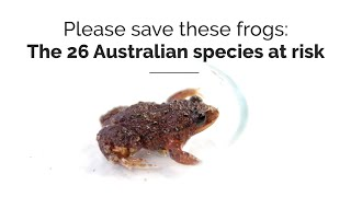 Please save these frogs: The 26 Australian species at greatest risk of extinction