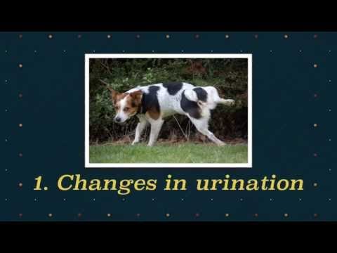Video 5 signs of kidney diseases in dogs