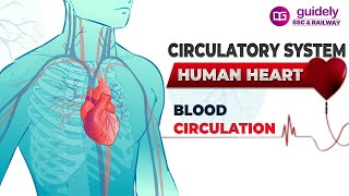 CIRCULATORY SYSTEM - HUMAN HEART !!