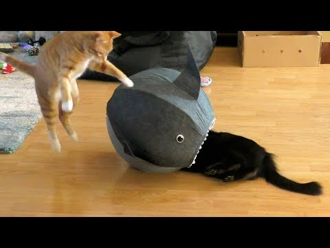 Funny Cat Clips! - Cole & Marmalade