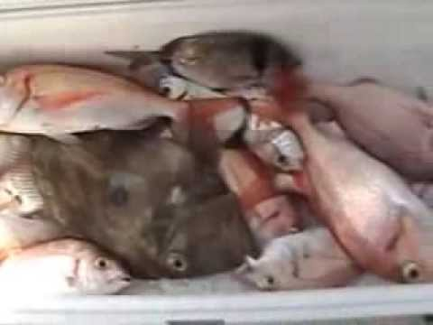 La pesca sul serbatoio di Klyazma di video