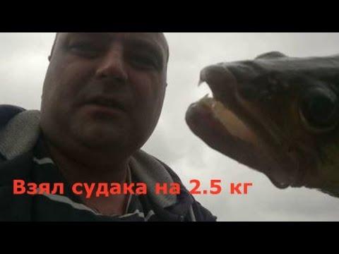 Еле вытащил судака на 2.5 кг всеволишь на вертушку
