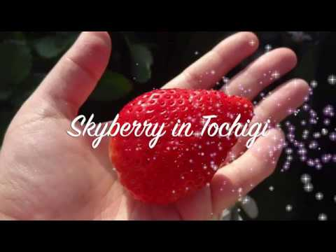 Made-In-Japan Product #28:  Skyberry