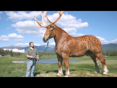 15 Rarest Cross Breed Animals In The World
