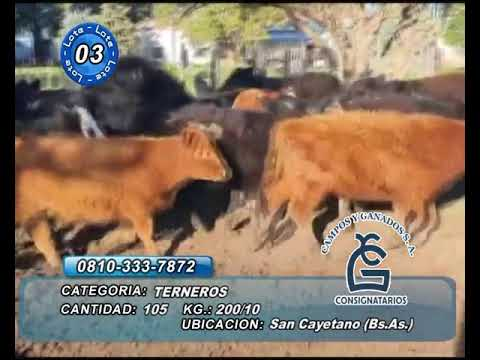 Lote MACHOS - San Cayetano Bs As