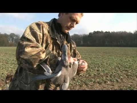 How to be a Pigeon Shooting Expert with James Marchington