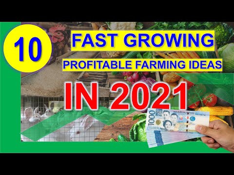 , title : 'The 10 Profitable Farming Ideas in 2021 with Farmgate and Retail Price