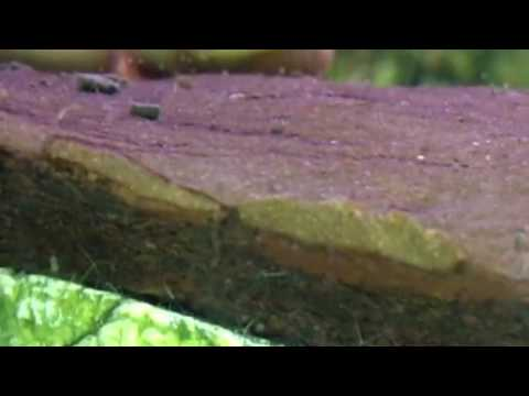 Castaneda parasites ng malay