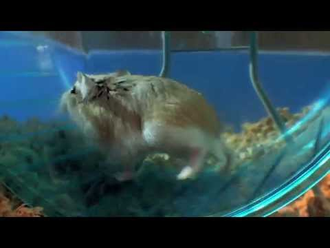 Funny Hamster Race – Pets Wild at Heart
