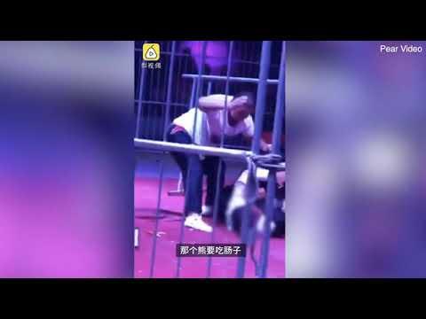 بالفيديو: دب يهاجم مدربه في السيرك أمام الحضور
