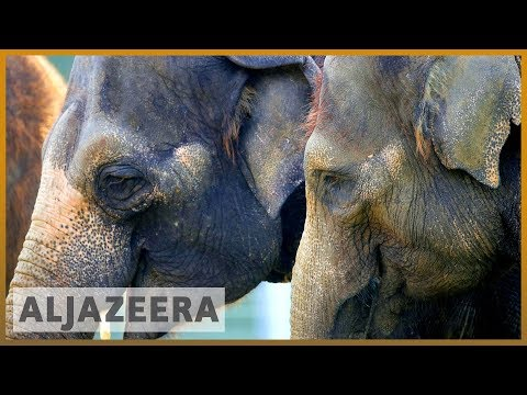 By the numbers: Illegal wildlife trade threatens species