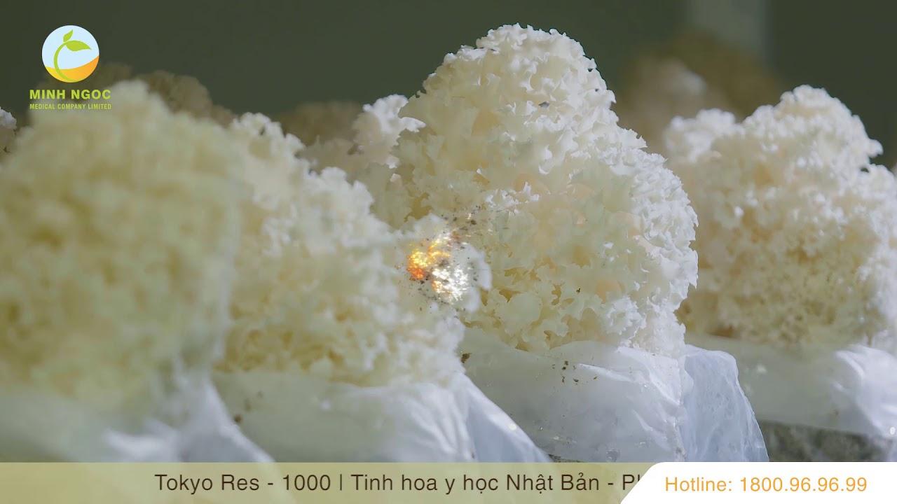 Tại sao Hanabiratake ( Sparassis crispa) lại được gọi là Nấm Miễn Dịch