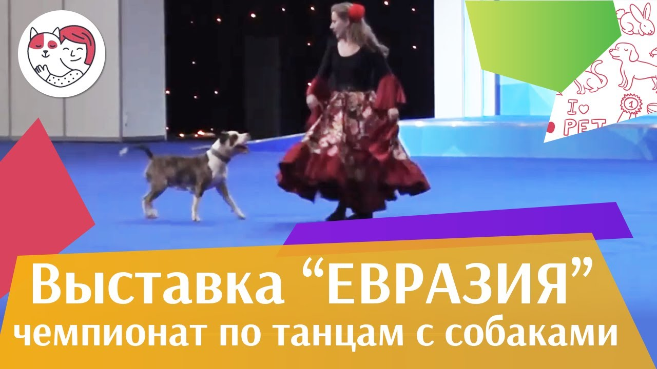 Чемпионат РКФ по танцам с собаками 3 на Евразии 17 ilikepet