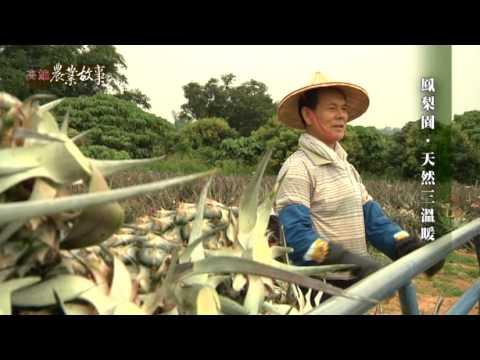 農業故事館-鳳梨