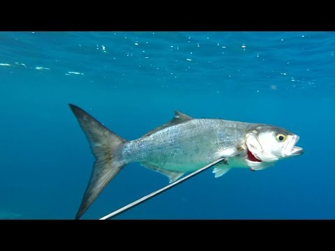 Quello che è necessario su pesca estiva