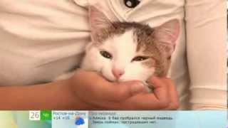 Смотреть онлайн Простой способ дать кошке таблетку