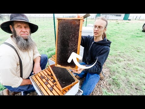 , title : 'BIGGEST mistakes AMERICAN beekeepers make! a MUST WATCH