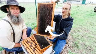 BIGGEST mistakes AMERICAN beekeepers make! a MUST WATCH