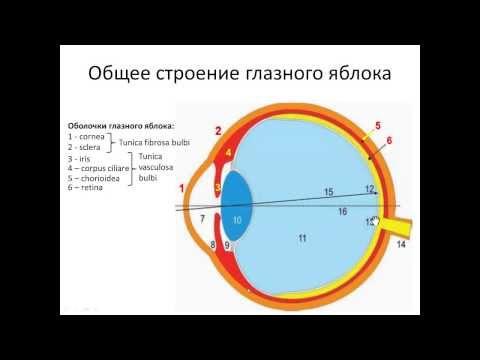 Амблиопия занятия для глаз