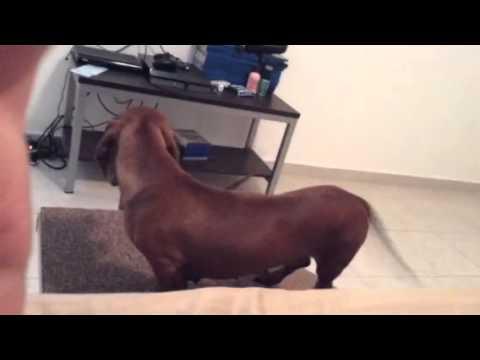 Rampa para los perritos