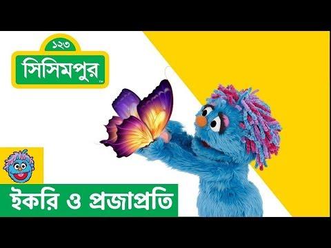 Sisimpur Ikri And Butterfly ইকরি ও প্রজাপ্রতি
