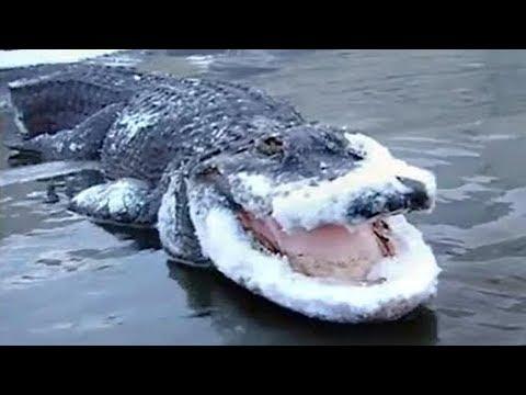 13 SHOCKING ANIMALS THAT WERE FROZEN IN ICE!