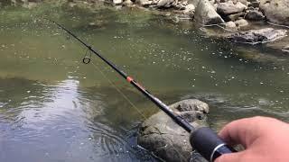 Дни ловля рыбы карпатах
