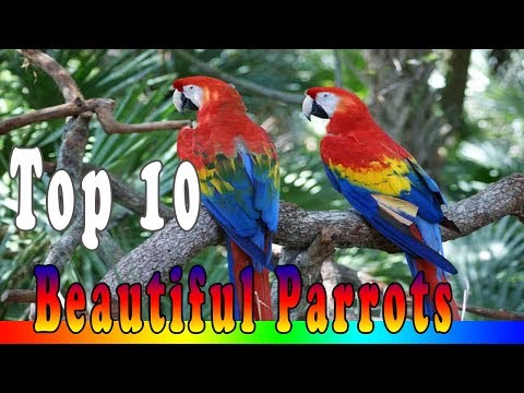 Top 10 Most Beautiful Parrots In The World